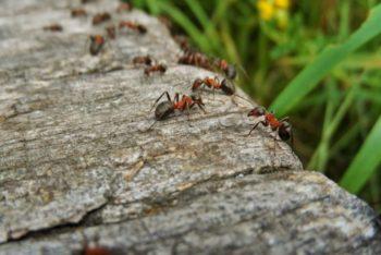 De mier filosofie